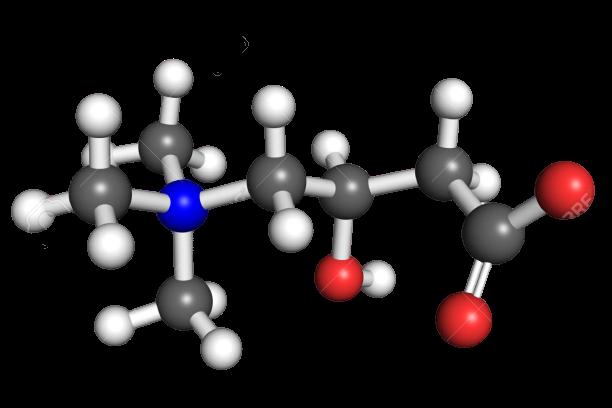 carnitine verbinding